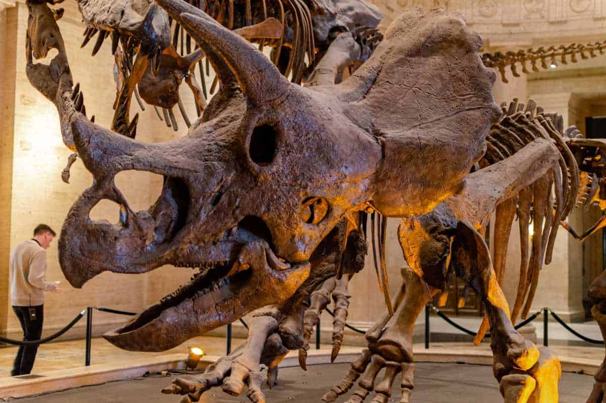 Day at the natural history museum of los angeles county